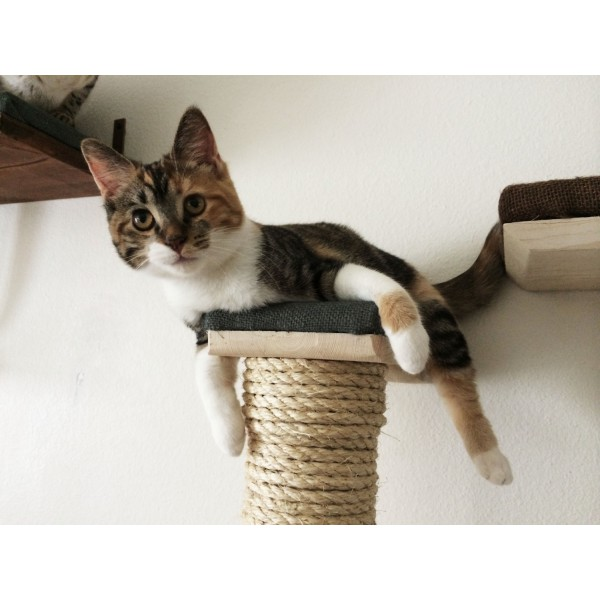 Cute Cat with Sisal